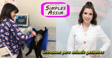 Ultrassom para animais gestantes