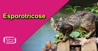 Esporotricose, o que é e como tratar